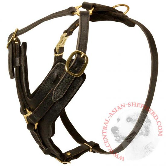 Padded Leather Central Asian Shepherd Harness for Agitation Training